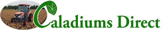 Caladiums Direct Logo